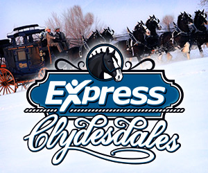 The Express Clydesdales